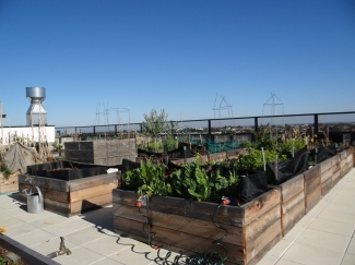 Commons roof top garden
